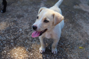 The SPCA always has puppies and older dogs available for adoption, instead of using online breeder websites. Photo: Stephen Kisbey-Green