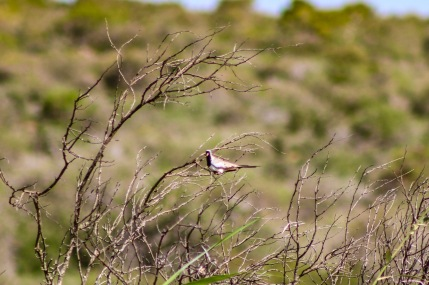 The Great Fish River Nature Reserve offers unparalleled birding experiences for avid bird watchers and photographers to enjoy. Photo: Stephen Kisbey-Green