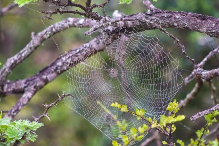 A spider's artwork lit up by the morning dew inside the Great Fish River Nature Reserve. Photo: Stephen Kisbey-Green
