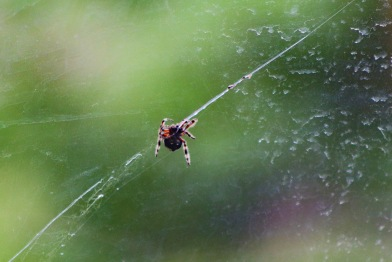 Creepy crawlers are everywhere in nature, with this little one landing up on the windshield of the Game vehicle in the Great Fish River Nature Reserve. Photo: Stephen Kisbey-Green