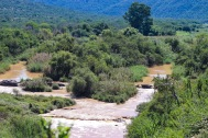There is always a high possibility of seeing Hippos in the Great Fish River. Photo: Stephen Kisbey-Green