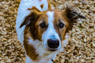 Bugsey, the rescued mix of various breeds, captured hearts at the Village Green. Photo: Stephen Kisbey-Green